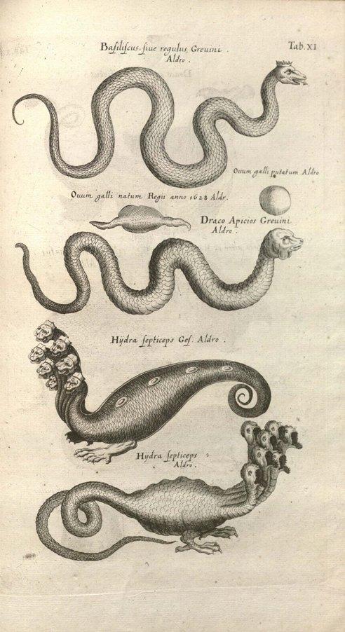 Image from Historiae Naturalis de Serpentibus (1757)