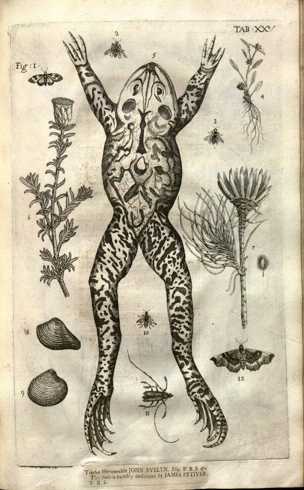 Plate from James Petiver's Gazophylacii Naturae & Artis in qua animalia [...]