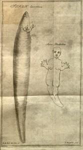 Linneana B65 v.6:146