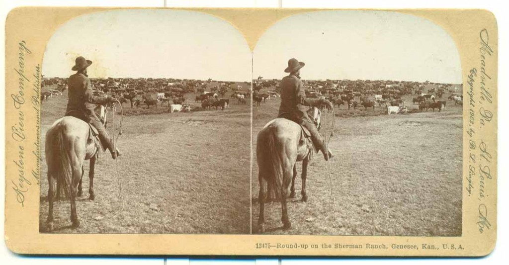 Photograph of a round-up on the Sherman Ranch, Genesee, Kansas, undated