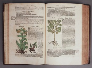 Page from herbal book. Call number Summerfield D291, Kenneth Spencer Research Library, University of Kansas.