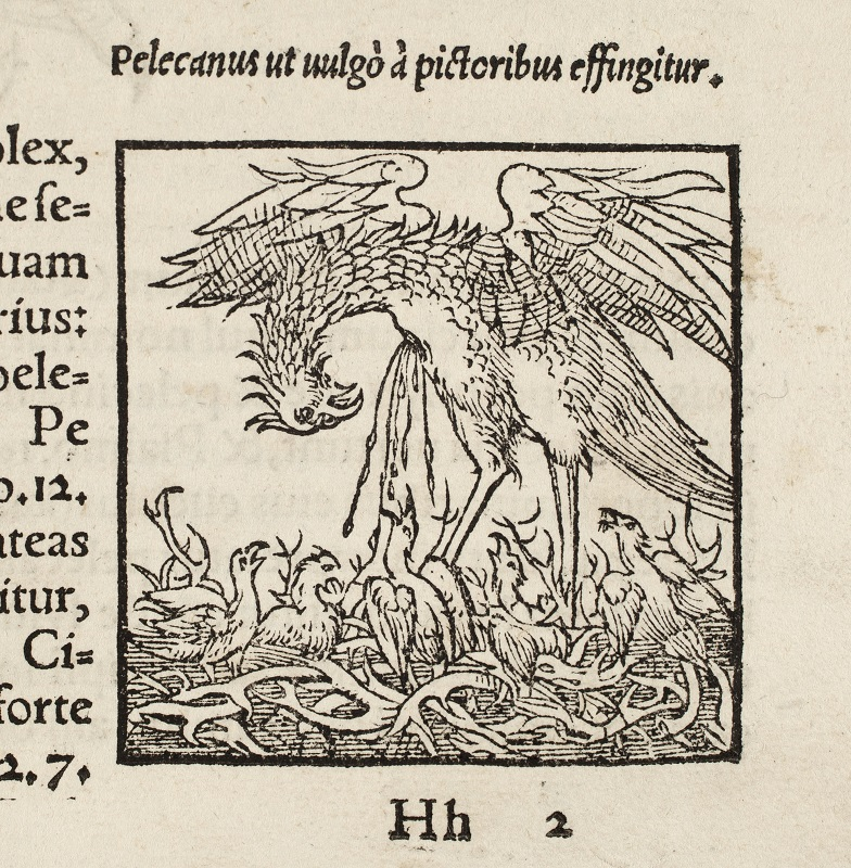 Image of a vulning pelican in Historia animalium, 1555