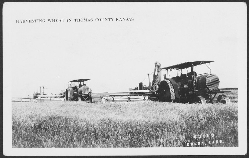 Photograph of a wheat harvest in Thomas County, Kansas, circa 1922