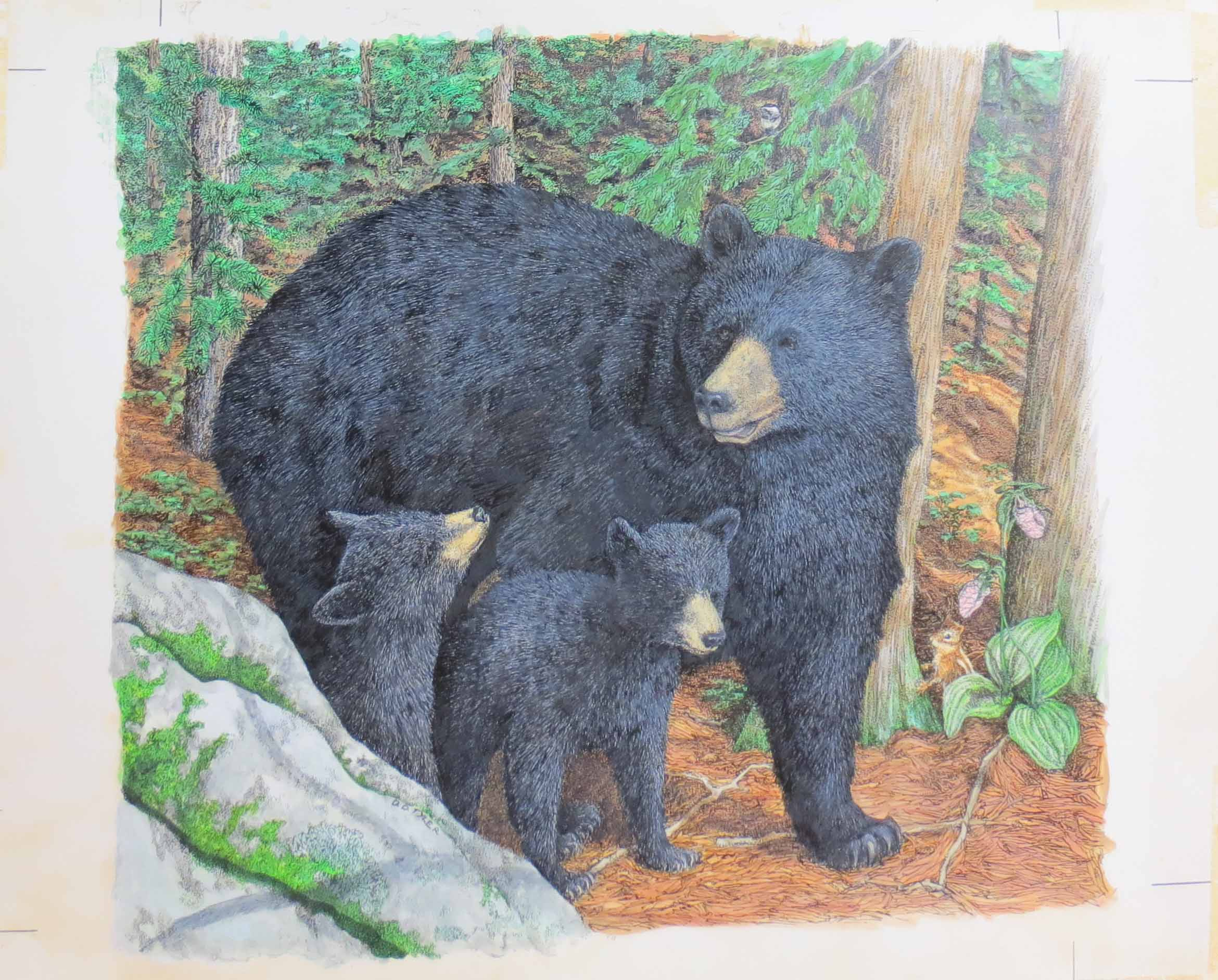 Color Drawing By D Tyler Of Mother Bear And Cubs For Book Bears In The Wild