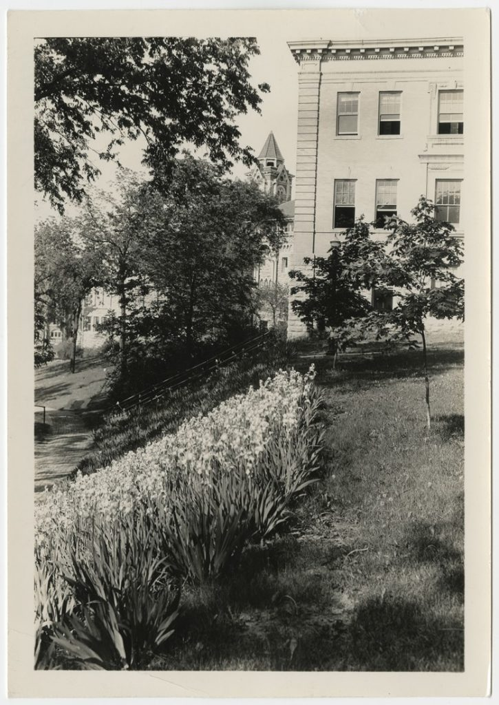 Photograph of flowers behind Old Green (now Lippincott) Hall, 1940s