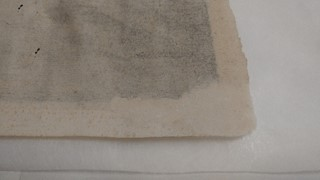 Cotton blotter was used to absorb excess water and help anchor and cast the pulp.